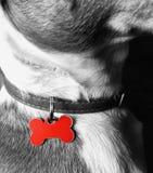 Desatureted begrepp för hundnamnetikett Arkivfoto