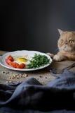 Desayune en la placa y el gato divertido curioso en el fondo Imagen de archivo libre de regalías