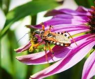 Desayuno del escarabajo Imagenes de archivo