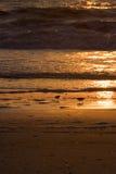 Desayuno en la playa II Foto de archivo libre de regalías