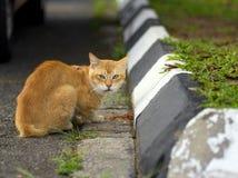 Desayuno para un gato Fotos de archivo