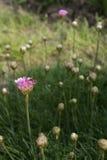 Desayuno rosado en prado verde Imagen de archivo