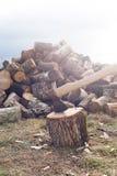 Desbastando a madeira com machado Fotos de Stock