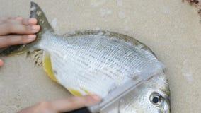 Descaling Fresh Fish stock footage