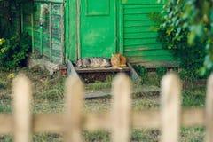 Descansar relaxa o gato de dois silêncios perto da porta de madeira imagens de stock royalty free