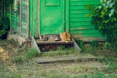 Descansar relaxa o gato de dois silêncios perto da porta verde de madeira fotografia de stock royalty free