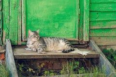 Descansar relaxa o gato quieto perto da porta verde de madeira imagem de stock