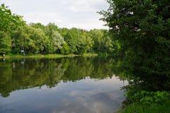 Descanse no lago, folha verde grossa, água clara, lago raso, uma natureza deliciosa, Fotografia de Stock