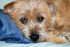 Descanse o filhote de cachorro Fotos de Stock Royalty Free