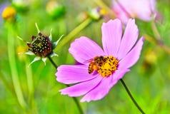 Descanso da abelha Imagem de Stock