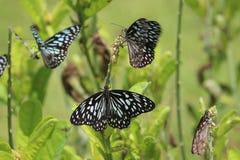Descanso das borboletas foto de stock