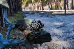 Descanso do abacaxi Algum parque perto da casa fotografia de stock royalty free