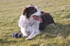Descanso do cão Imagem de Stock