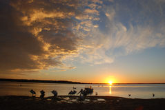 Descanso do pelicano Fotografia de Stock Royalty Free
