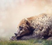 Descanso do urso de Brown foto de stock royalty free