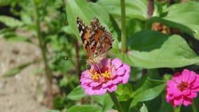 Descanso na flor Imagens de Stock Royalty Free