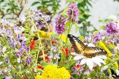 Descanso tropical da borboleta imagem de stock royalty free