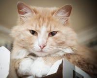 Descansos do gatinho Imagens de Stock Royalty Free