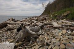 Descarga de lixo no litoral, plástico, logs secos da espuma - um desastre ambiental imagem de stock royalty free