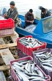 Descarga de los pescados fotos de archivo