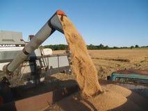 Descarga del trigo Foto de archivo libre de regalías