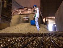 Descarga do feijão de soja em um silo imagens de stock royalty free