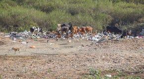 Descarga e animais de lixo imagens de stock royalty free