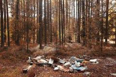 Descarga nas madeiras Imagem de Stock