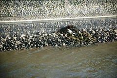 Descarga no rio imagens de stock