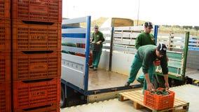 Descarregando caixas do abacate, fruto da indústria filme