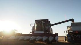 Descarregando a colheita de milho ao caminhão no campo vídeos de arquivo