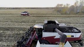 Descarregando a colheita e o transporte de milho no campo video estoque