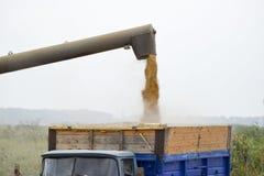 Descarregando o parafuso uma ceifeira de liga Descarregando a grão de uma ceifeira de liga em um corpo do caminhão Imagem de Stock