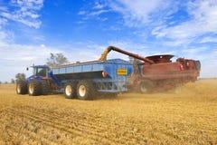 Descarregando o trigo colhido em uma faixa clara foto de stock royalty free
