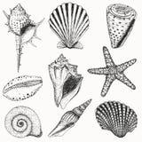 Shell fijó Fotografía de archivo libre de regalías