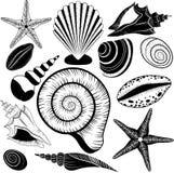 Descasca la colección. Vector fijado con las conchas marinas y las estrellas de mar Fotos de archivo