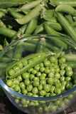 Descascando ervilhas - close up Fotografia de Stock