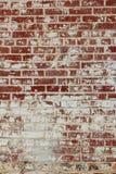Descascando a pintura branca em uma parede de tijolo vermelho foto de stock royalty free