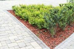 Descasque em decorar canteiros de flores com os arbustos decorativos da paisagem fotos de stock royalty free