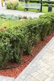 Descasque em decorar canteiros de flores com os arbustos decorativos da paisagem foto de stock royalty free