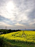 Descending airplane. On cloudy sky with yellow fields Stock Images