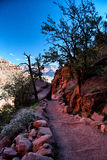 Descending into the Grand Canyon. Path leading down into the Grand Canyon Royalty Free Stock Photos