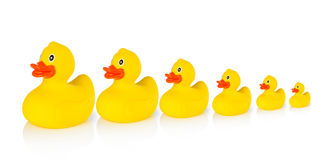 Descending rubber ducks in a row. White background Royalty Free Stock Image