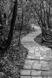 Descending winding hiking path in Taiwan. Black and white photo of a descending winding stone hiking path in Taiwan cutting through the forest Royalty Free Stock Image