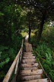 Descending wooden stairs in forest Stock Photo