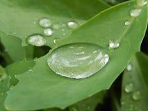 descenso, agua, verde, limpio, mañana, claro, hermoso, descensos, hoja, pote, Fotografía de archivo