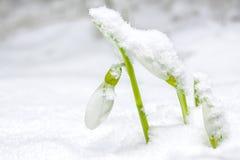Descenso de la nieve Fotos de archivo libres de regalías