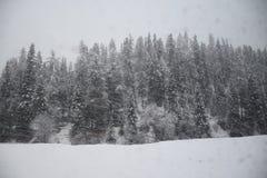 Descenso de la nieve en bosque del pino Imagen de archivo libre de regalías