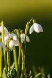 Descenso de la nieve en la hierba en la luz del día Fotografía de archivo libre de regalías