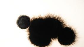 Descenso de la tinta negra Salpicadura de la tinta en el fondo blanco Chapoteo negro que se amplía en el contexto del Libro Blanc metrajes